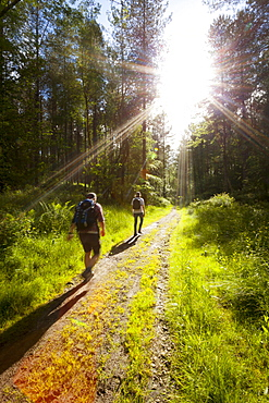 Young men hiking on an outdoor adventure trail, The Chilterns, Buckinghamshire, England, United Kingdom, Europe