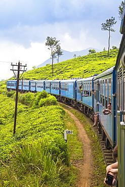 Kandy to Badulla train alongside tea estate, Nuwara Eliya, Central Province, Sri Lanka, Asia