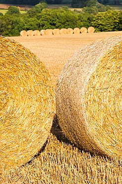Hay bales in The Cotswolds, Longborough, Gloucestershire, England, United Kingdom, Europe