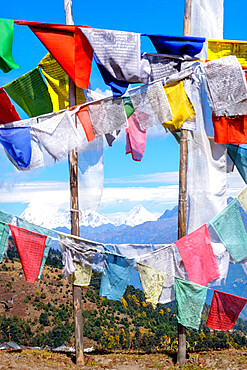 Prayer flags at Chelela Pass against snowcapped Himalayas, Bhutan.