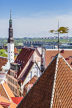 Aerial view of the walled part of Old Town, UNESCO World Heritage Site, in the capital city of Tallinn, Estonia, Europe