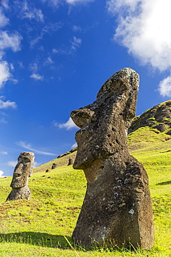 Moai sculptures in various stages of completion at Rano Raraku, the quarry site for all moai on Easter Island, Rapa Nui National Park, UNESCO World Heritage Site, Easter Island (Isla de Pascua), Chile, South America