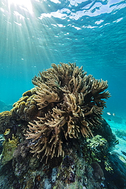 A profusion of hard and soft coral underwater on Tengah Besar Island, Komodo Island National Park, Indonesia, Southeast Asia, Asia