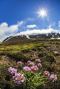 A view of the stratovolcano Snaefellsjokull, Snaefellsnes National Park, Snaefellsnes Peninsula, Iceland, Polar Regions