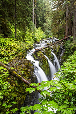 Waterfall on the Sol Duc Falls Trail, Sol Duc Valley, Olympic National Park, UNESCO World Heritage Site, Washington State, United States of America, North America