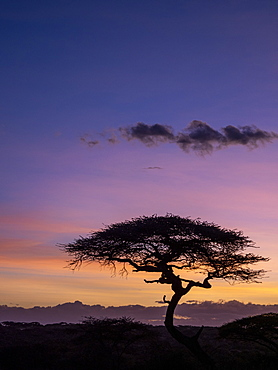 Sunrise over acacia trees in Serengeti National Park, UNESCO World Heritage Site, Tanzania, East Africa, Africa