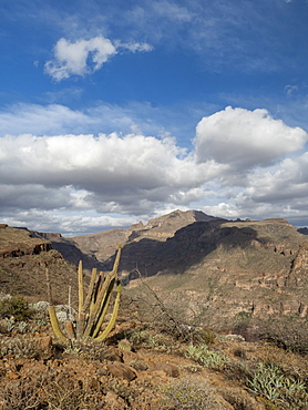 Sierra de San Francisco in the El Vizcaino Biosphere Reserve, Baja California Sur, Mexico, North America