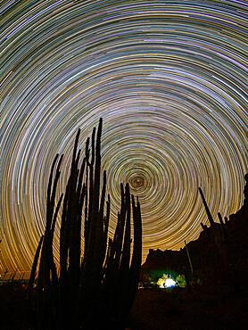 Organ pipe cactus at night, Stenocereus thurberi, Organ Pipe Cactus National Monument, Sonoran Desert, AZ, USA.