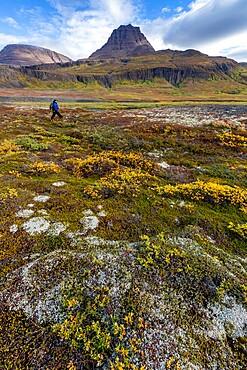 Hiker in open tundra and columnar basalt in Brededal, Disko Island, Qeqertarsuaq, Baffin Bay, Greenland, Polar Regions