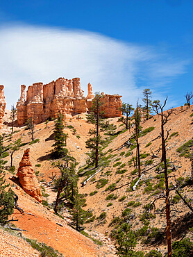 A view of the hoodoos from the Fairyland Trail in Bryce Canyon National Park, Utah, USA.
