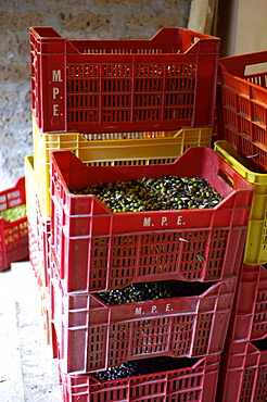 Red boxes filled with olives, Umbria, Italy
