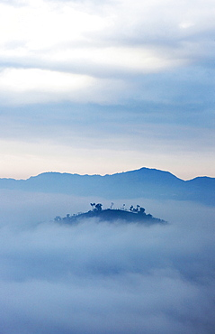 Mountain tops in the high fog at sunrise, Rueili, Alishan, Taiwan, Asia
