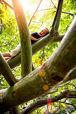Boy lying in a tree, Botanic Gardens, Singapore