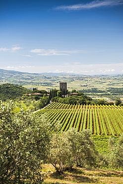 Argiano vinery, near Montalcino, province of Siena, Tuscany, Italy