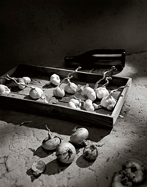Garlic and onions drying, Food