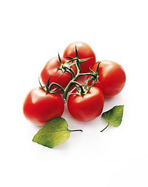 Red tomatoes on the vine, Vegetables, Food, Nutrition