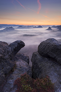 View from Gleitmannshorn over the small Zschand at dawn with rocks and blooming heather in the foreground, Kleiner Winterberg, National Park Saxon Switzerland, Saxony, Germany