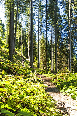 Mountainbiker in the woods, Garmisch-Partenkirchen, Bavaria, Germany