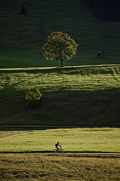 Young woman riding her bike near a meadow on a sunny day, Tannheimer Tal, Tyrol, Austria
