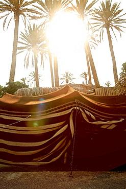 Bedouin tent in an oasis, Negev, Israel