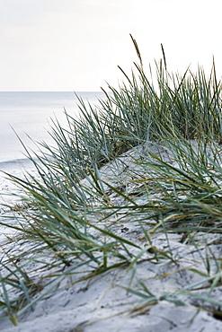 Grass, dream beach between Strandmarken und Dueodde, sandy beach, summer, Baltic sea, Bornholm, Strandmarken, Denmark, Europe