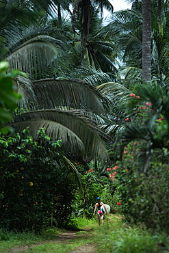 Young female surfer walking on a path through a forest, Sao Tome, Sao Tome and Príncipe, Africa