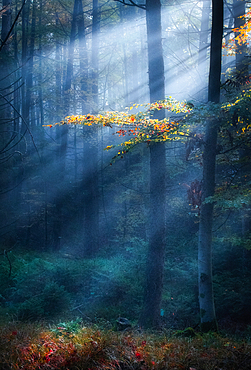 Autumn colors in the morning mist with Jakobsleiter, Ostersee, Iffeldorf, Germany
