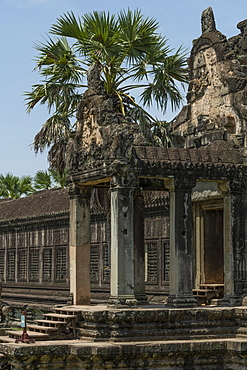 Stone entrance with palm at Angkor Wat, Siem Reap, Siem Reap Province, Cambodia