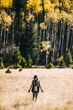 A woman walks across a field of golden grass towards a forest, Lockett Meadow, California, United States of America