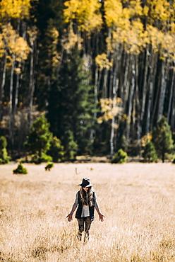 A woman walks across a field of golden grass towards a forest, Lockett Meadow, California, United States of America