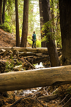 A man stands on a log over a stream in a forest, Julia Pfeiffer Burns State Park, California, United States of America