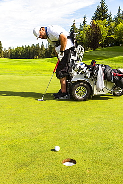 A physically disabled golfer putting a ball on a golf green and using a specialized golf assistance motorized hydraulic wheelchair, Edmonton, Alberta, Canada