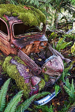 Arty image of derelict motor car in a ditch overgrown with moss and ferns, Vancouver Island, British Columbia, Canada