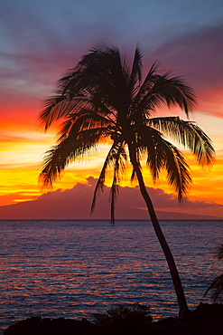 Palm tree at sunset, Wailea, Maui, Hawaii, United States of America