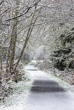 Snow falls on Netul River Trail, Astoria, Oregon, United States of America