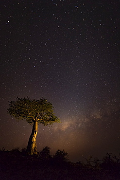 A starry sky with light glowing on the horizon and a tree in the foreground, Ethiopia