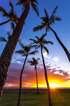 The sun sets behind silhouetted palm trees, Kihei, Maui, Hawaii, United States of America