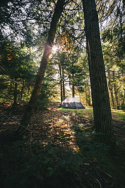 A Nightcap tent set up in the opening of a forest with a sunburst, Cobscook State Park, Maine, United States of America