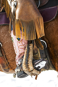 Pink cowboy boot of a cowgirl in a stirrup with leather chaps on the side of a horse, Montana, United States of America