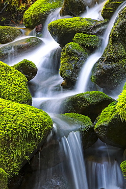 Moss-covered rocks with cascading water, Denver, Colorado, United States of America
