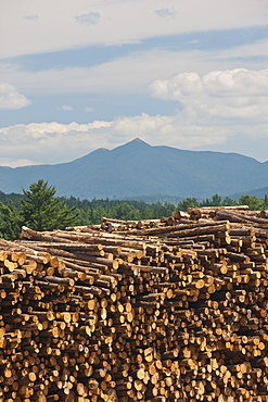 Stack of logs in a forest, Berlin, New Hampshire, USA