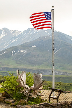 The American Flag flys at the Eielson Visitor Center. Also seen is a rare set of 2 bull moose antlers locked together (the bulls likely died as they couldn't get unlocked). Denali National Park and Preserve, Interior Alaska; Alaska, United States of America