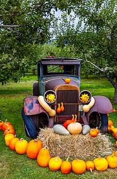 Pumpkin display with old vehicle decorating a yard; Canada