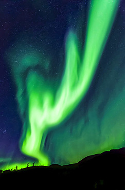 Intense antler-shaped aurora waving over Mount Fairplay, Taylor Highway, Interior Alaska in autumn; Alaska, United States of America