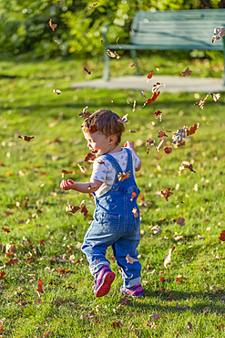 Toddler girl plays with falling autumn leaves in a park; North Vancouver, British Columbia, Canada
