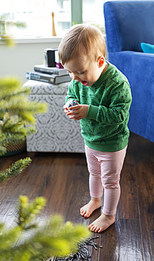 A toddler girl discovers a piece of a nativity set under the Christmas tree; Surrey, British Columbia, Canada