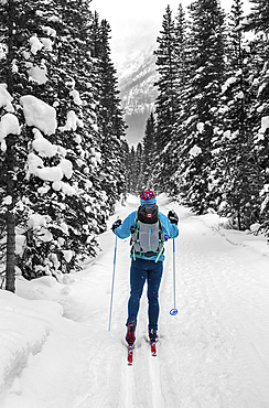 Female snowshoeing on snow-covered trail amongst snow-covered trees, Banff National Park; Lake Louise, Alberta, Canada