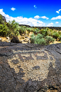 Petroglyphs on volcanic rock with sagebrush in the background, Piedras Marcadas Canyon, Petroglyph National Monument on a sunny, spring afternoon; Albuquerque, New Mexico, United States of America