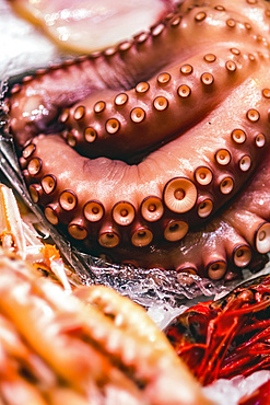 Octopus tentacles in a seafood market; Valencia, Valencia, Spain