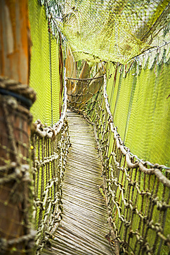 Rope and wood bridge with netting in Ecuadorian forest tree fort; Calicali, Ecuador